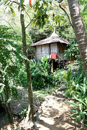 The Mangrove : Hut ...