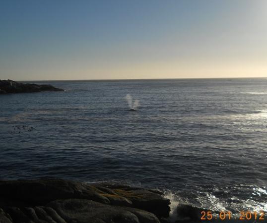 Avanti Guesthouse: Baleines vue depuis le balcon