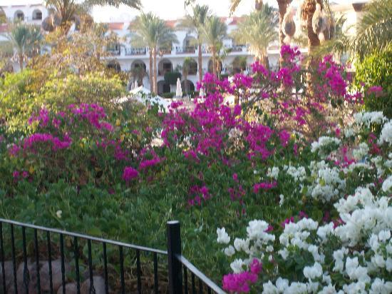 The Royal Savoy Sharm El Sheikh : Vistas de la Isla de Tirant