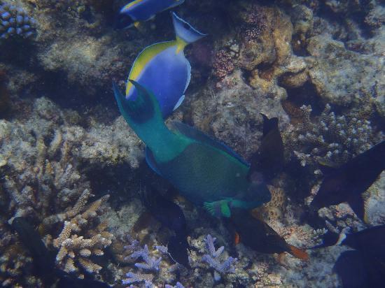 PER AQUUM Huvafen Fushi: Fonds marins