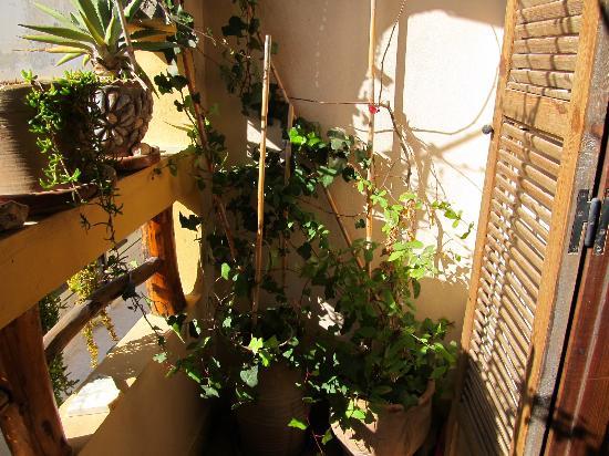 Casa Guapa de Tamuziga: 1 von 2 Balkonen