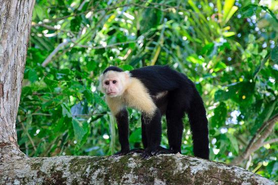Sheraton Bijao Beach Resort : Un signe dans la jungle, cette photo fut prise lors de notre excursion sur le canal
