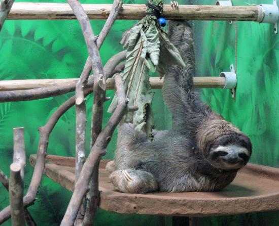 Bungalows Malu: sloth rescue