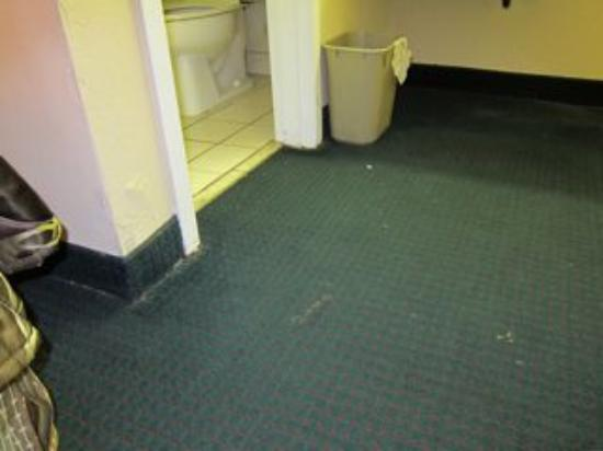 Days Inn Fort Lauderdale Airport Cruise Port: carpet is dirty and stained