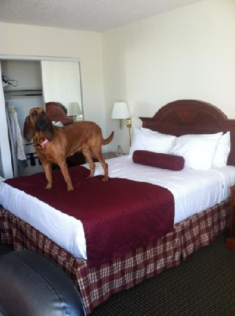 BEST WESTERN Cooper's Mill Hotel: Dog approved