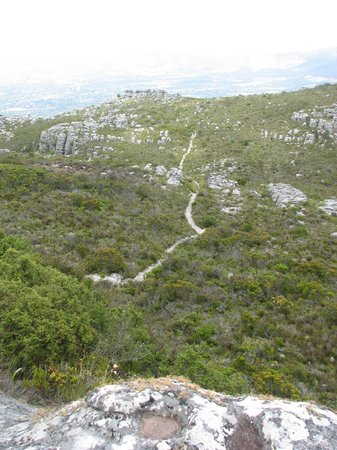 Half-Day Hiking and Trekking Tour on Table Mountain