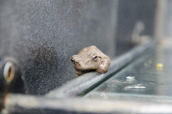 Nkorho Bush Lodge: our pet frog in the outside shower