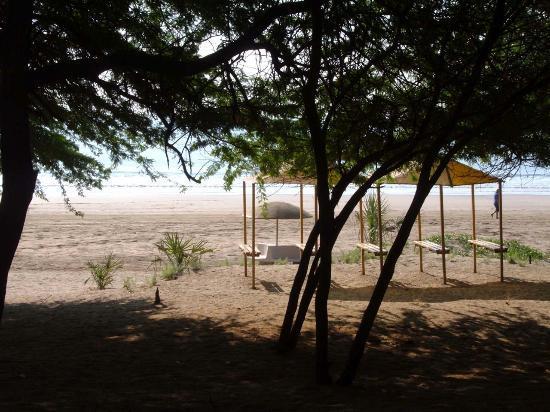 Ghogla Beach: Shade and trees at beach