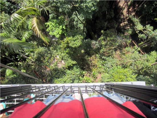 Tamborine Mountain Tours: Skywalk