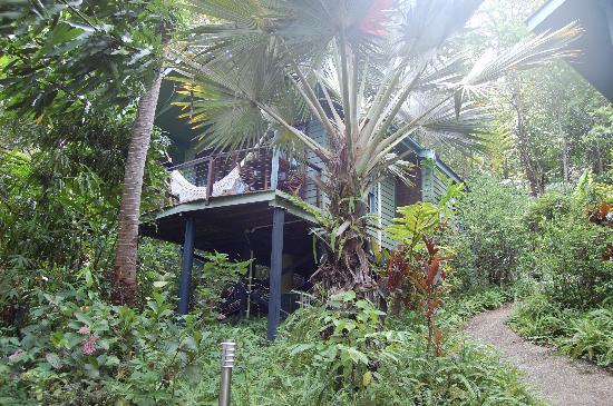 Silky Oaks Lodge : Tree House 2