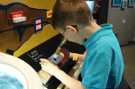 Science Museum of Minnesota: interactive miscroscope