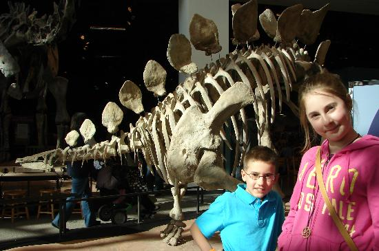 Science Museum of Minnesota: great dino exhibit