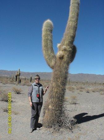Parque Nacional Los Cardones: Cardón de mas de tres metros de altura.