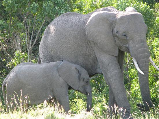 Ngerende Island Lodge: Elephant family