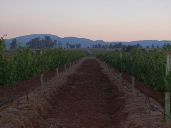 Harrison Hope Wine Estate: sun sets the color changes