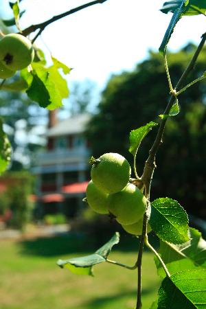 Applewood Manor Inn Bed & Breakfast : Pick an Apple