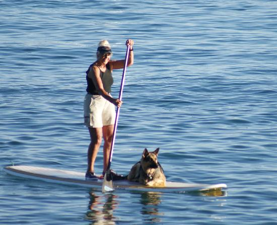 Holiday House: Stand Up Paddle Activity