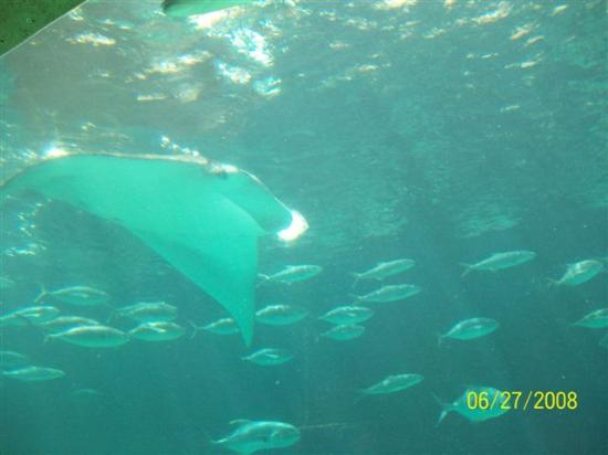 Blue Water Resort on Cable Beach: ocean life