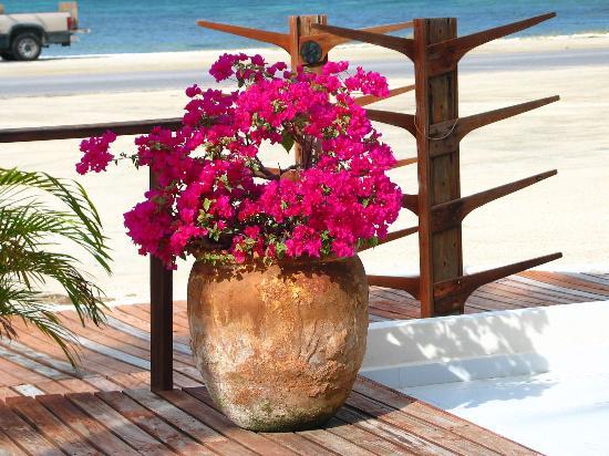 Aruba Beach Villas: view from deck