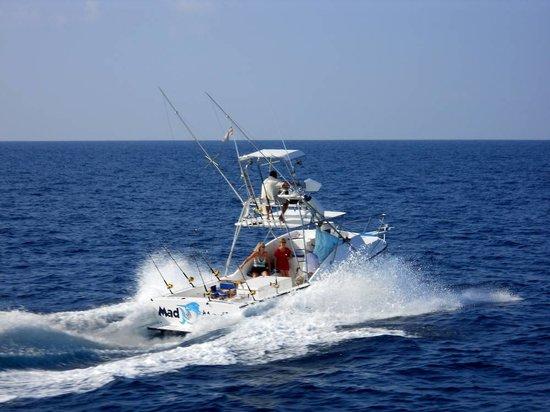 Mad Marlin Sportfishing: Mad Marlin
