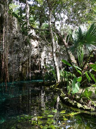 Grand Cenote: quelle nature !