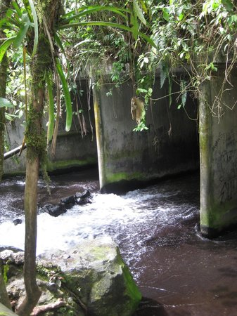 La Fortuna de San Carlos, Costa Rica: free hot springs 3