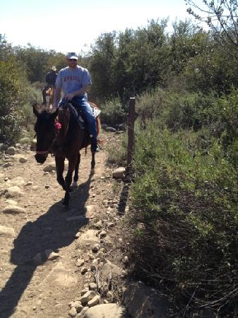 Ojai Valley Trail Riding Company : ask for brownie