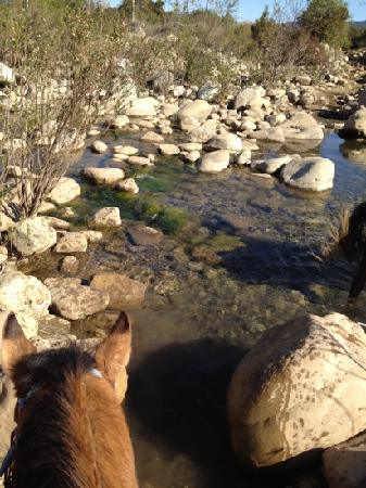 Ojai Valley Trail Riding Company : great trail!
