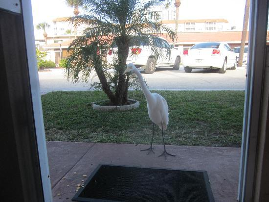 Gulf Beach Resort Motel: Our little friend.