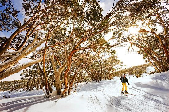 Amor, Austrália: Snowgums at Mt Baw Baw