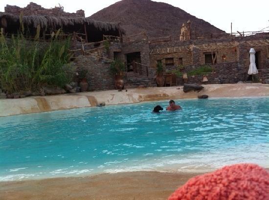 Castle Zaman: Mocha swimming in the pool