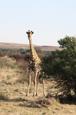 Mattanu Private Game Reserve: cool animals
