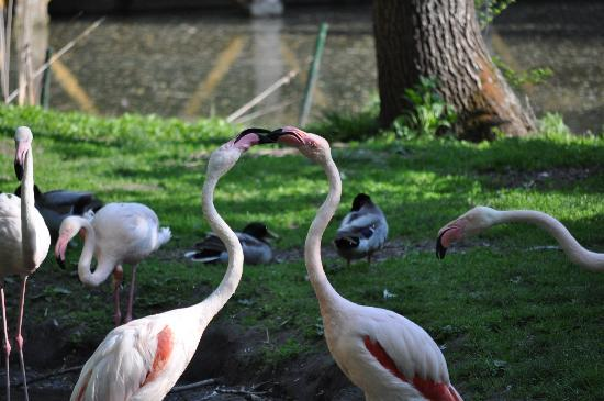 Sosto-zoo