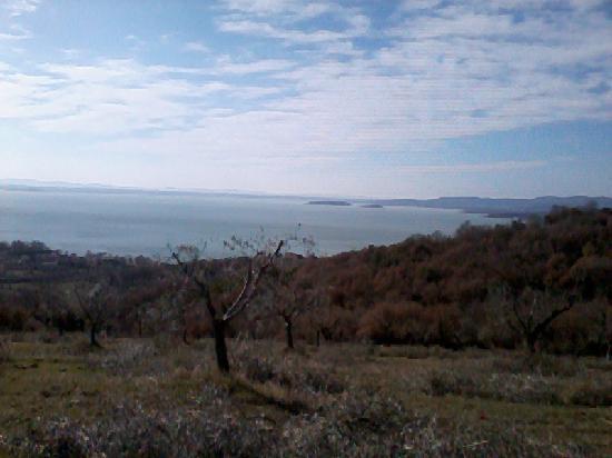 Agriturismo Casale il Picchio : veduta del lago trasimeno