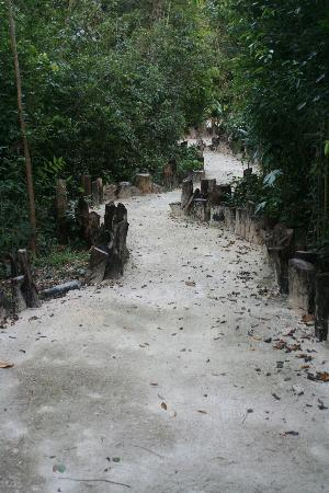 Jolie Jungle: There are lots of meandering trails to walk or bike