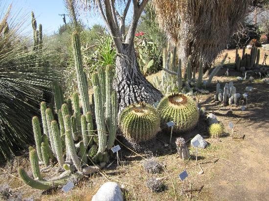 University of California Riverside Botanic Gardens: cactus collection