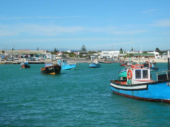 Pelican's Harbour Cafe: Struisbaai Harbour