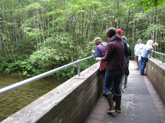 Sitka Salmon Tours: Watching salmon swim upstream