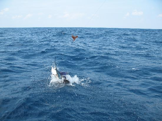 Andrea m is fast with twin yams picture of keen m for Isla mujeres fishing