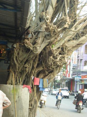 HueNino Hotel: 大木への信仰