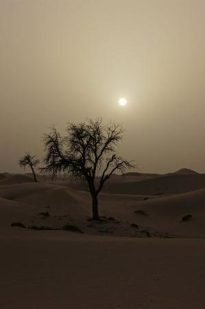 Emirates Tours and Safaris: The dunes you'll scale