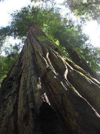 Redwood National Park: Stout Grove