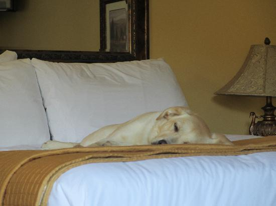 Monterey Peninsula Inn: Comfy accommodations