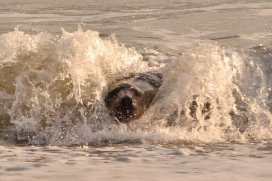 Seehotel:  Surfin' Helgoland