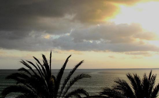 HSM Golden Playa: Blick durch die Palmen