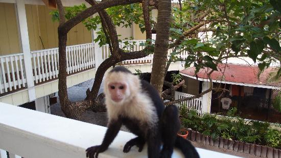 Fantasy Island Beach Resort: one of 3 monkeys
