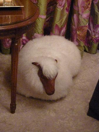 The Goring: Cute Sheep!