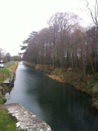 Naas Canal, close to Mill Lane House