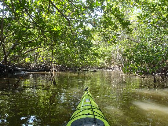 Everglades Kayak Company: paddling the mangrove tunnel