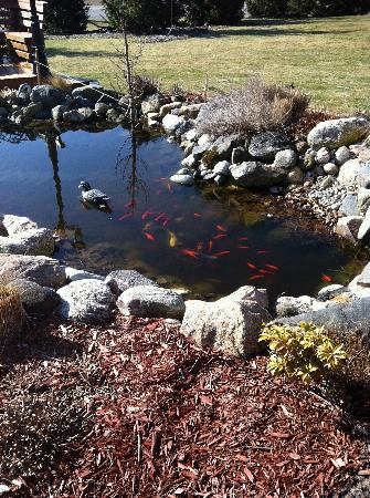 Serenity Ranch Bed and Breakfast: koi pond